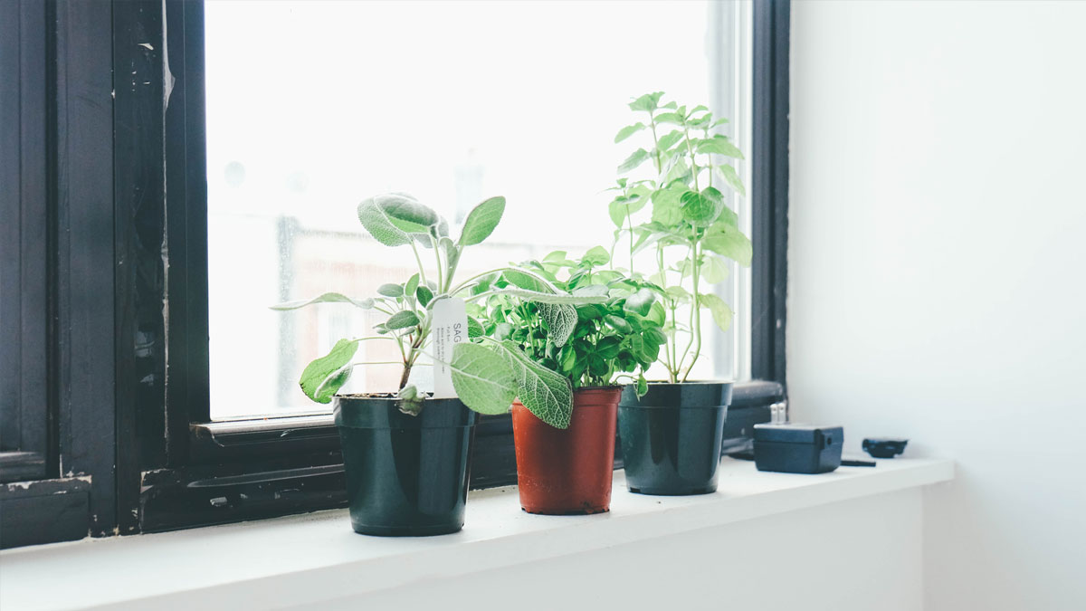 Indoor plants on a window sill